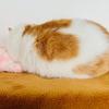 きびだんごで愛猫と仲良し作戦!