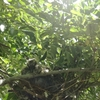 ハトのヒナ誕生12~13日目にして発見だらけ。ハトのヒナの目が怖い。羽の生え方が怖い。今回の写真はちょっと刺激が強い。