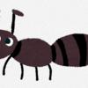 家の中に入ってくる蟻の対策について