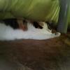 【愛猫日記】毎日アンヌさん#220