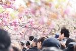 東京都内で混雑を避けてゆっくりお花見ができる穴場の桜の名所ベスト10