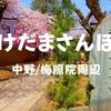 【けだまさんぽ】桜の季節!ソメイヨシノ会いに中野区散歩してきた、2019年3月