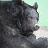 【和歌山公園動物園】和歌山城郭内にある動物園へレッツゴー!(写真あり)