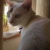 猫と豆苗の日なた争い