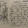 春の七草:「ほとけのざ」