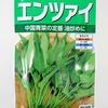 『空芯菜(エンツァイ)』を水耕栽培しましょう。真夏に採れる葉物野菜として活躍する予定です