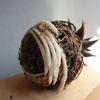 伊羅保流し鉢 X「瑠璃殿」 芸術的な螺旋根