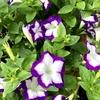 最高気温33° 梅雨の晴れ間の花たち