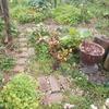 咲き続ける庭とタケノコと黒椿