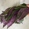 具沢山にすれば満足度大!加賀野菜「金時草」のコンソメスープ