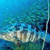 タイ タオ島④ ~チュンポンピナクル 圧倒的な魚の群れ~
