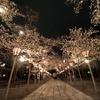 【Photo】夜桜撮影に名所「三嶋大社」へ出かけてきました。