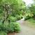 高いビルだけでなく植物が鬱蒼と生い茂る場所もあってビックリ@東京都港区赤坂