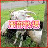 服部牧場 実は宿泊キャンプもできる牧場 動物が駆け回るキャンプの穴場 神奈川県愛甲郡愛川町