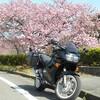 どんぴしゃ満開!春いっぱい! 河津桜ツーリング2011