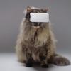 ついに猫専用VRが発売!室内猫もこれで気分転換出来る?