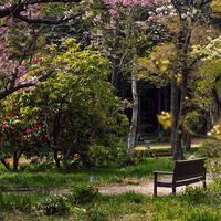 秩父宮記念公園「オールドレンズで楽しむ春3」(2017.04.20)