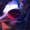 4/29日【遊び】あやとり【お出かけ】LEGOランド、Sea Life【読み聞かせなど】危険生物のクイズ図鑑他
