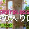 桜『春の入り口』三ツ池公園 DJI Japan cherry blossoms①