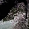 市ヶ谷 外堀の桜 2011 (2)