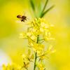 ミツバチが一生で集める蜜はティースプン1杯分。今日は何の日 8月3日「はちみつの日」