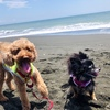 【海沿いドライブ】愛犬と《茅ヶ崎〜湯河原》を楽しむ!西湘バイパス、国道135号、真鶴ブルーライン