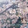 関東はもう桜が咲いていました!花粉症対策はお済みですか?