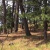 松林、和の景色の立役者(松原公園)