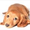 寺田茂の好きな犬ダックスフント