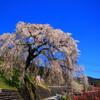 飛騨萩原の桜