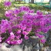 札幌・春の花-豊平ふれあい通り、札幌パークホテル、河岸公園 2021・5月