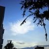 ◆こたえは風の中に…は、ほんとうにそう。