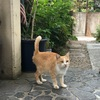 外猫たちの夏