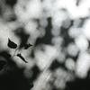 木漏れ日の中に 木の葉の影。