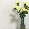 お花の成長