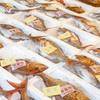 2020年2月25日 小浜漁港 お魚情報