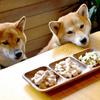 ドックフードの成分や原材料から柴犬にはどんなものが抜擢する?