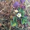 自然農法による草マルチの作り方とメリット・デメリットとは?
