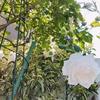 庭木は私の生活を映すバロメーター