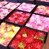表参道の花が咲くカフェ「ニコライ・バーグマン」に行ってみたけど、あまりの場違いっぷりにおっさん困惑。