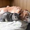 犬と猫は、愛情をもって接してね