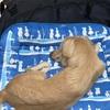 犬にとってキャンプはやっぱり疲れるのかな