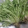 大阪で手ぶらで簡単に畑を作りたい!レンタル畑を使ってみよう!