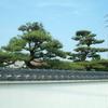梅雨の季節の風物詩2 綺麗になる庭木たち
