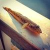 2日連続の昼休みのハゼ釣り!ハゼは正月用とボージョレーヌーボー用に…