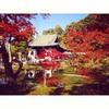 秋の京都をチャリ散歩する時に行くとこ