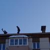 😆屋根のひと@ユジノサハリンスク😆【キロちゃん旅】