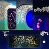 水族館 新江ノ島水族館 クラゲファンタジーホール