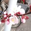 そして桜三昧~!
