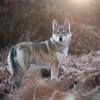 【人狼】人狼ゲームって面白い(ロジカルシンキングの練習にもなる)